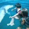 Raira Dolphin